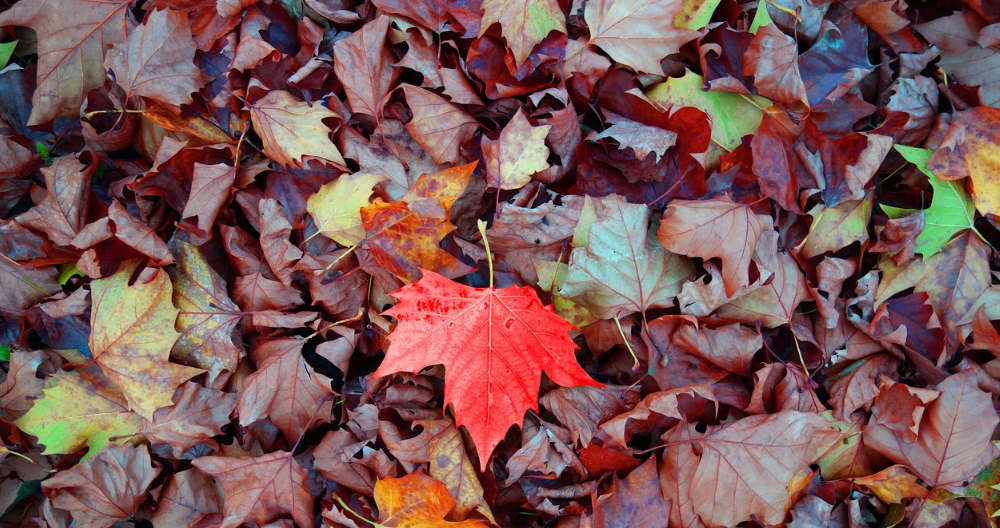 leaves help moisture accumulate and can damage driveways
