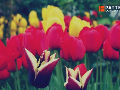 Adding a Beautiful Garden To Your Yard