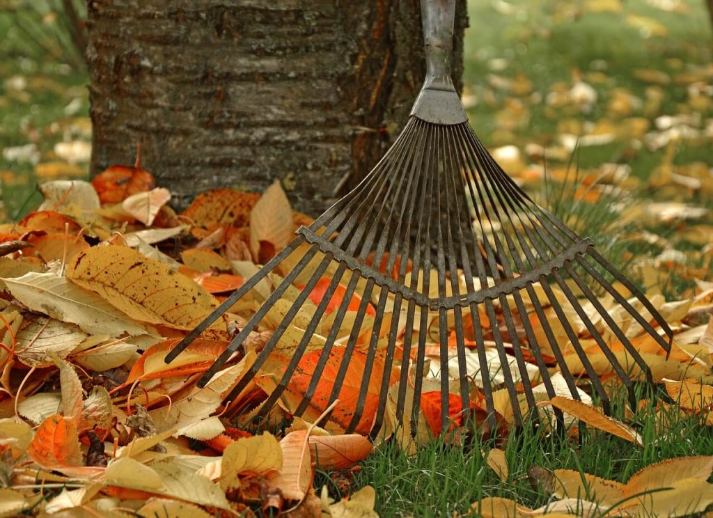 a good leaf rake comes in handy year round