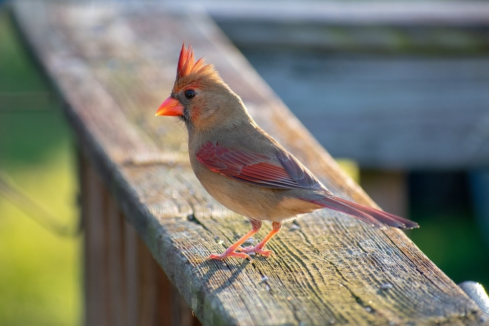 enjoy our feathered friends from the comfort of your patio