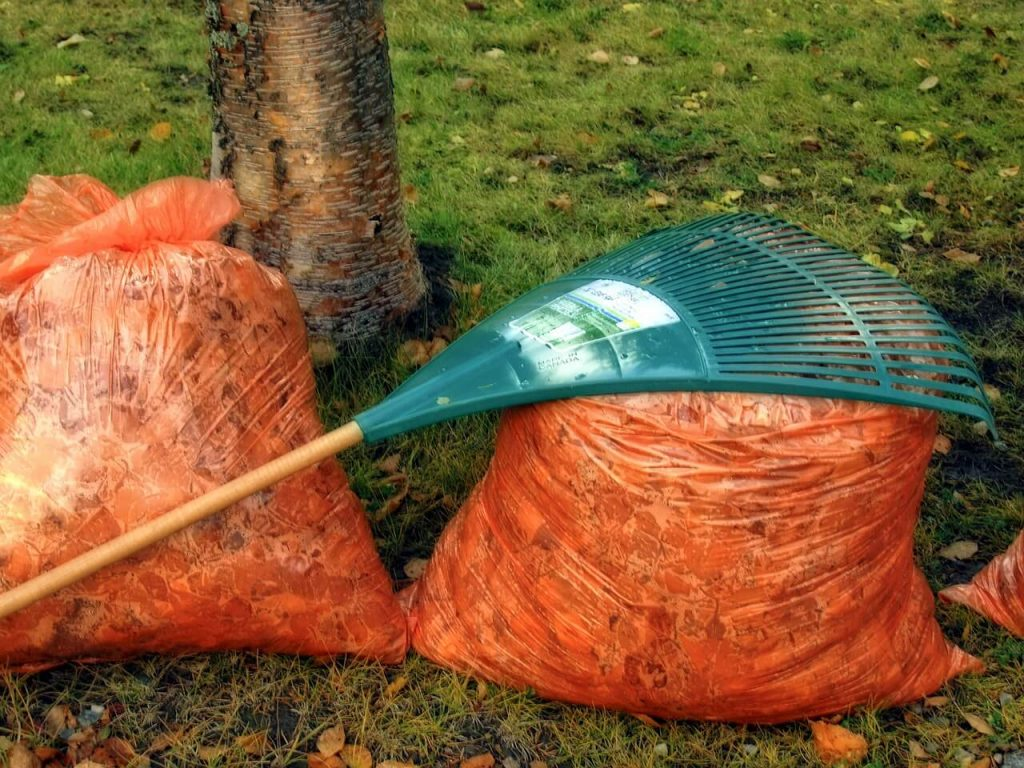 raking leaves helps your grass breathe