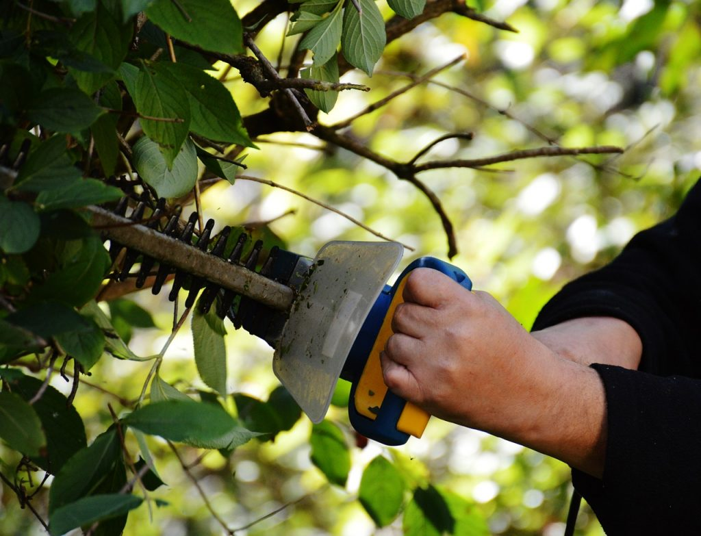 many bushes can be trimmed in fall