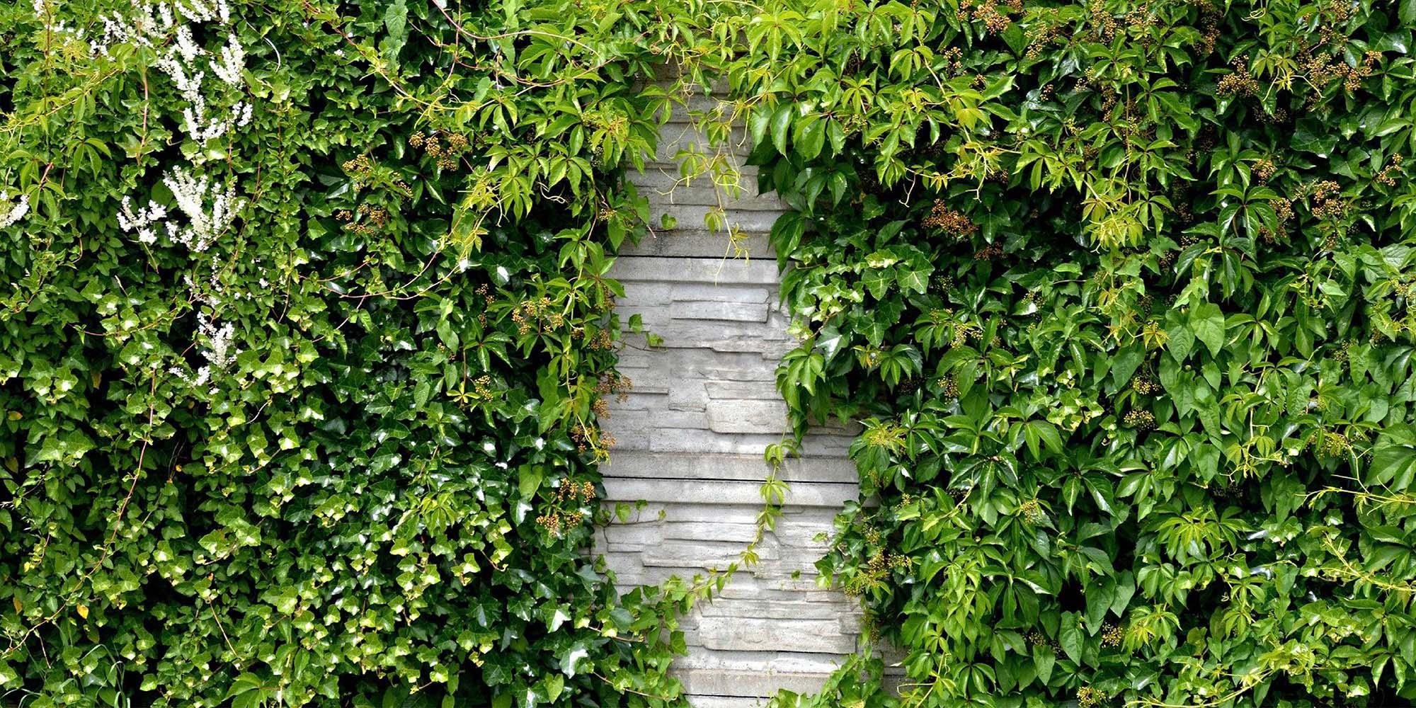 plants_trees_around_concrete